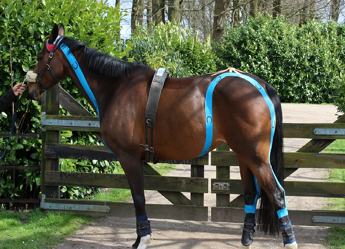 Pro Dynamic for Horses Chain taping Blue
